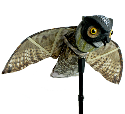Prowler Owl Image