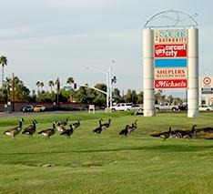 canada goose retailer las vegas