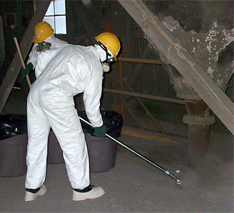 Hazmat workers clean pest bird droppings