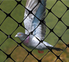 Structural Bird Netting concept