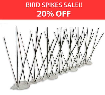 Extra Tall Stainless Spikes