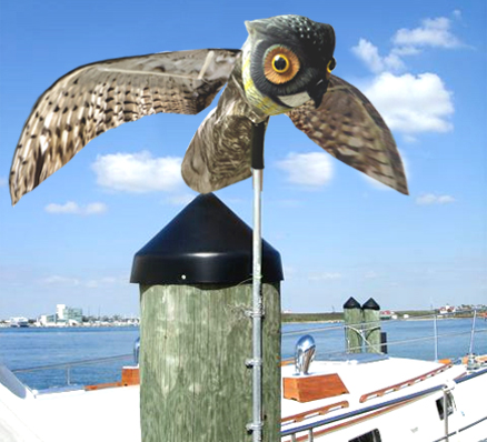 Prowler Owl repels gulls from dock