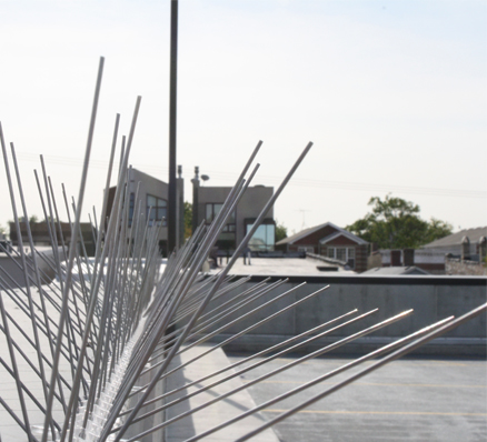 stainless steel spikes rooftop ledge