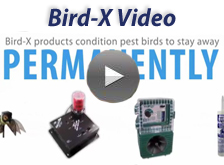 about bird-x brand video