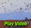 Demo: Repelling seagulls from landfill